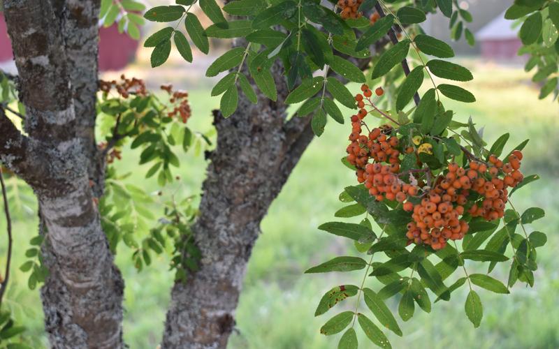 Vuodenkierron muutokset huomaa täällä helposti, kun malttaa seurata luonnonmerkkejä tulevasta.