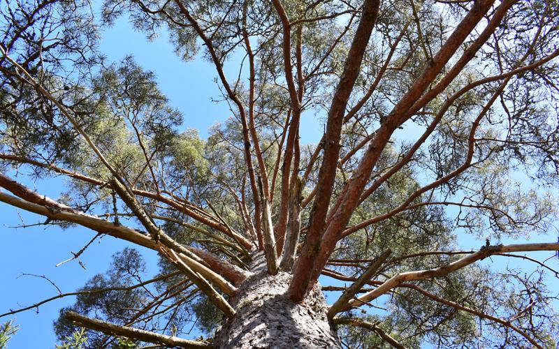 Metsässä voi etsiä uusia näkökulmia arkeen ja itse metsään.