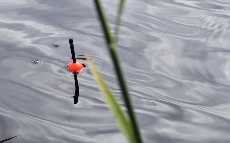 Ongenkoho kelluu veden pinnalla.